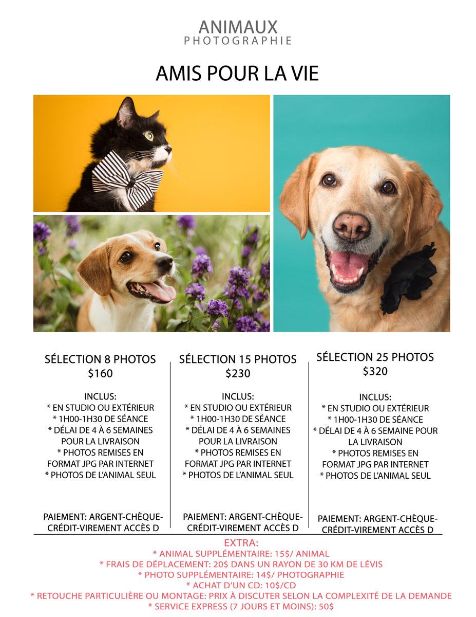 webAmis-pour-la-vie-2020
